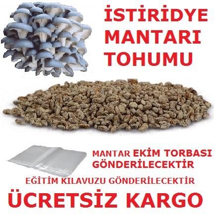 Göbelek Tohumu (1 Kğ)